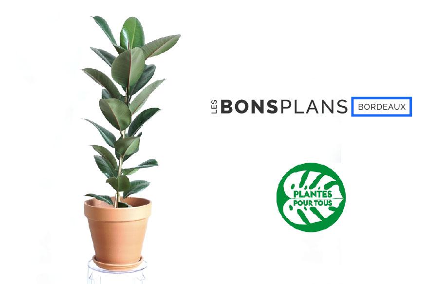 Les Bons Plans Bordeaux vous font gagner un Ficus Elastica avec Plante pour tous !