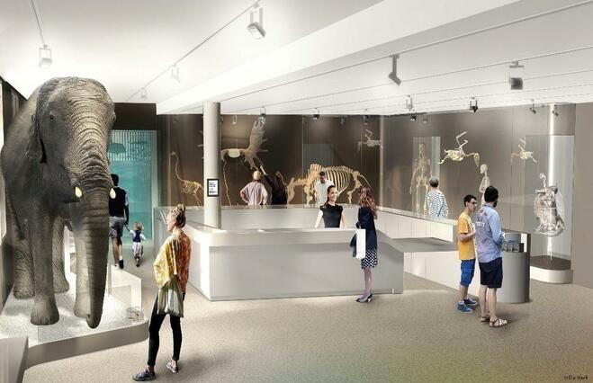 Les Bons Plans à Bordeaux : Réouverture du Museum de Bordeaux le 31 mars 2019-home