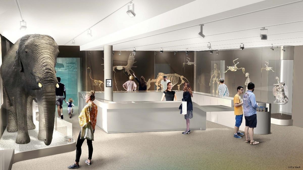 Les Bons Plans à Bordeaux : Réouverture du Museum de Bordeaux le 31 mars 2019