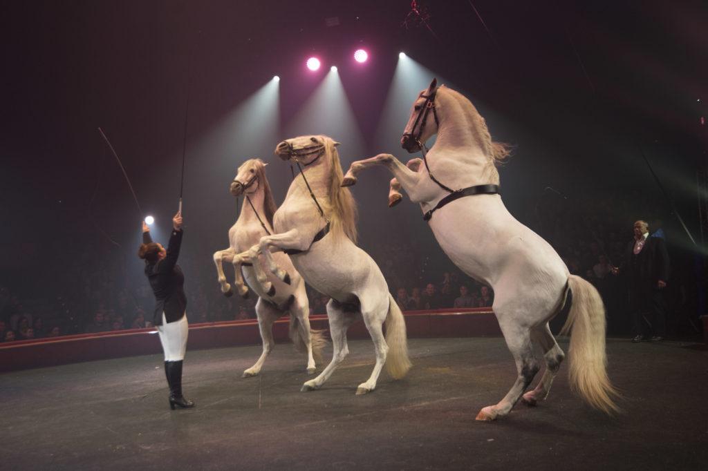 Les bons plans à Bordeaux présentent : le cirque Arlette Gruss fête ses 35 ans à Bordeaux, avec des représentations pendant les vacances de Noël ! 2